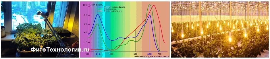 Зачем нужны фитолампы для растений